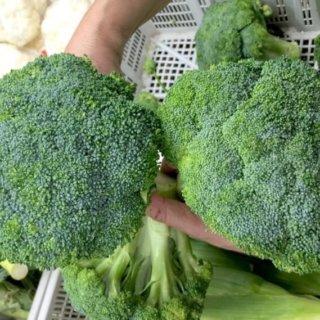 How to choose Brocolli